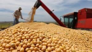 Aumento en el nivel de actividad del mercado de granos local
