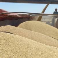 La AFIP y la Secretaría de Gobierno de Agroindustria acordaron adecuar el sistema de liquidación de granos