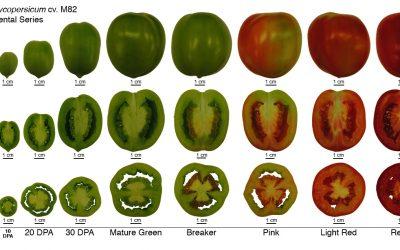 Fisiología del crecimiento y maduración de frutos