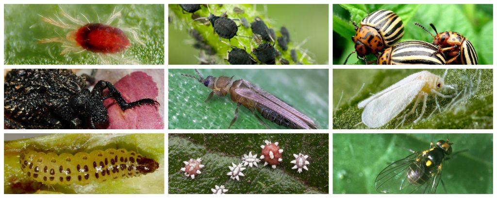 Compendio de insecticidas ecológicos para los cultivos. Listado por tipo de plaga