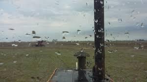 Precipitaciones con mayor actividad en el nordeste del área agrícola y marcado descenso térmico