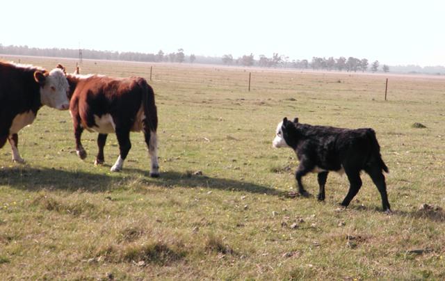 """""""Construyendo la agenda del campo"""", jornada de la Sociedad Rural Argentina"""