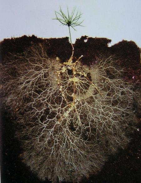 Materia microbiana importa: Lo que el Informe sobre la Diversidad Biológica significa para el suelo