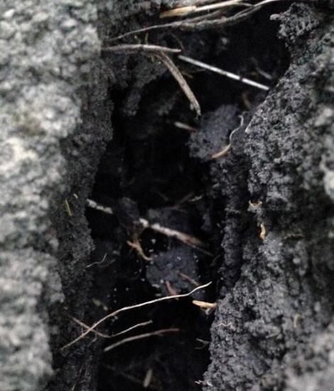 ¿Cómo afecta la profundidad de la raíz al suelo cercano?