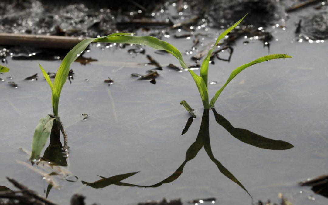 Los retrasos en la siembra de cultivos alcanzan niveles históricos, lo que resulta en altos niveles de incertidumbre