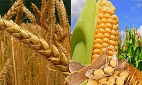 Cada vez más lejos de la soja, el nuevo ciclo marcará otro récord de rotaciones de cultivos