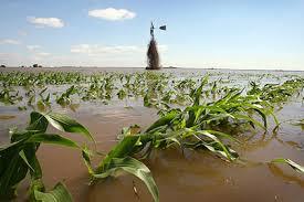 Fuerte recorte para la cosecha de maíz en Estados Unidos