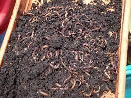 Lombricultura: Ahorro en el uso de fertilizantes y mejora de los cultivos