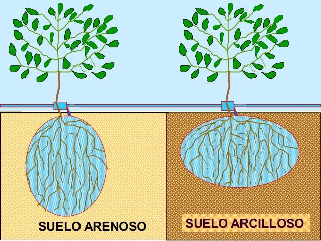 Características del suelo que inciden en el desarrollo de las raíces de la vid y palto