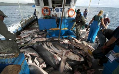 Jefe de la FAO elogia el tratado internacional de lucha contra la pesca ilegal, no declarada y no reglamentada