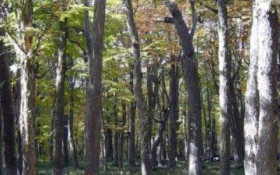 Entender el clima futuro a partir de las interacciones entre árboles y hongos