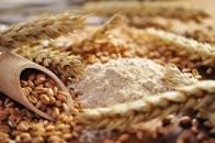 Avanza la siembra del trigo de la campaña nueva 2020-2021