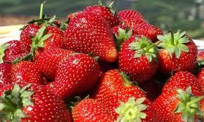 Producción agroecológica de frutillas en Chaco