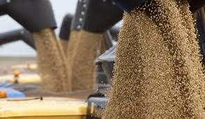 El gobierno anunció una cosecha récord de 147 millones de toneladas en al campaña agrícola 18/19
