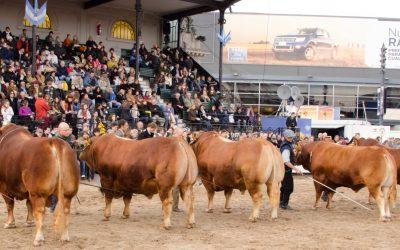 Limousin llega a la Expo Rural 2019, con animales de pedigree de Córdoba y Buenos Aires