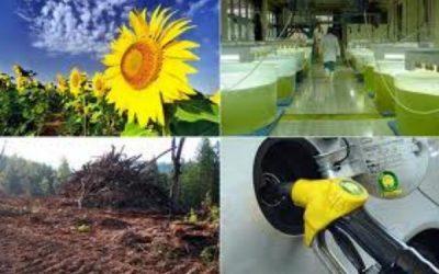 Reclaman por cambios que reactiven al sector de los biocombustibles