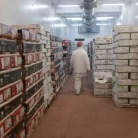 El volumen de las exportaciones de alimentos creció 15% durante el primer semestre de 2019