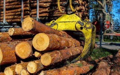 Sector foresto industrial argentino: por el impacto del Covid-19 se espera una reactivación de los mercados mundiales