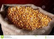 Bolsa de Cereales porteña espera un aumento del 3,3 % en el área destinada a maíz para la campaña 2019-2020
