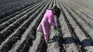 En búsqueda del ilegal trabajo infantil y otras irregularidades en el agro, Renatre actuó en 13 provincias