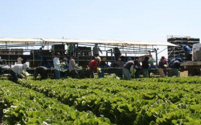 Cultivos de cobertura, compost y carbono.