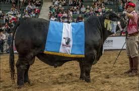 Ganados y carnes: el desafío de llegar al podio