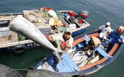 Se expandió la demanda interna de recursos pesqueros en un 18%