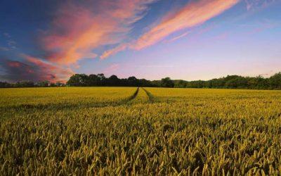 La salud del suelo puede combatir el cambio climático desde cero