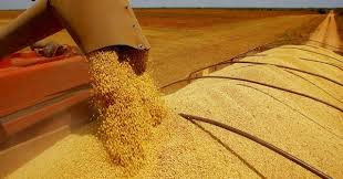 Vigencia de la normativa para liquidación de contratos de granos en dólares