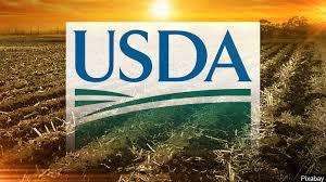 Informe del USDA: los datos destacados del reporte que impulsa a la soja