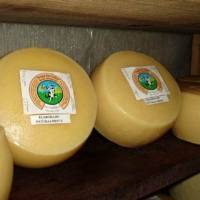 """Productores de queso artesanal acceden al sello """"Producido por la Agricultura Familiar"""""""