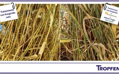 Un complemento clave para las aplicaciones de fungicidas