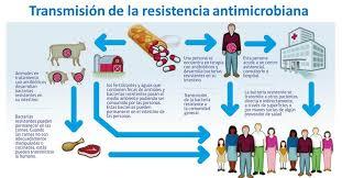 La resistencia a los antibióticos está aumentando drásticamente