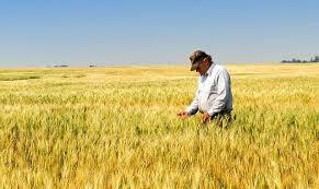 Importante caída en la confianza de los productores agropecuarios