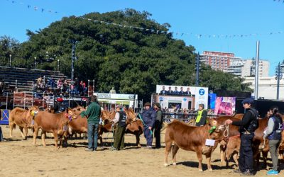Limousin estará en la 72º Exposición de Ganadería, Industria y Comercio de la Sociedad Rural de Jesús María, Córdoba