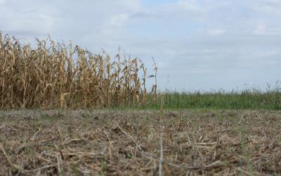 Sobre la biofertilidad de los suelos y el poder del manejo agrícola
