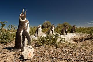Trelew promociona la Temporada de Pingûinos y el verano en el Valle de Chubut