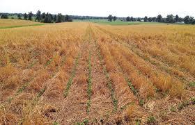 El cambio de paradigma de la agricultura argentina requiere un esquema impositivo adecuado