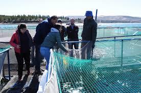 Muestreo anual en la zona libre de enfermedades de los salmónidos