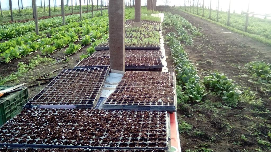 Bolsones de verdura orgánica: de la huerta a la mesa