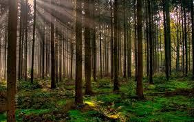 Formalizan la medición de Gases Efecto Invernadero (GEIs) del Agro y Bosques