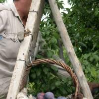 Modificaciones para aguas minerales y alimentos vegetales en el Código Alimentario Argentino