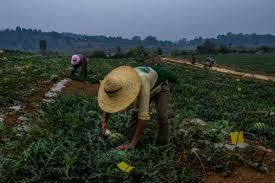 El FIDA insta a los Gobiernos de la región de Asia y el Pacífico a invertir en los jóvenes de las zonas rurales