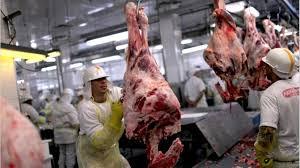 Sigue creciendo la faena de carne vacuna