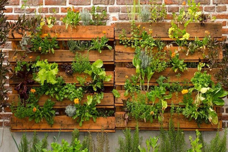 Huertas verticales, otro motivo para seguir de siembra
