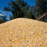Argentina consigue un nuevo récord histórico de exportación de maíz y consolida su proceso de transformación local