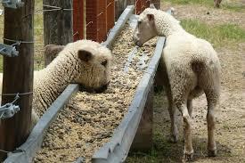El sector privado piensa el futuro de la carne ovina en Rosario
