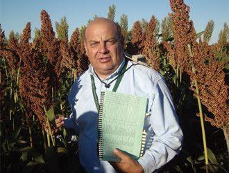 La utilización del sorgo en planteos ganaderos intensivos