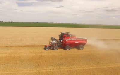 Se dolarizan los servicios de cosecha