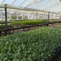 Nueva convocatoria de Alianzas Productivas en el sector agroindustrial